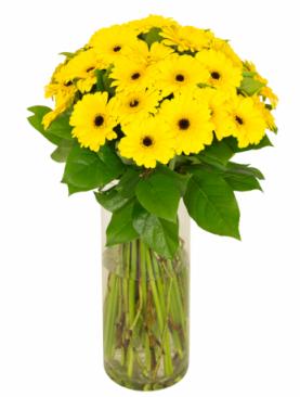 Bouquet de gerbera jaunes