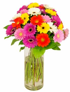 Bouquet de gerbera multicolores