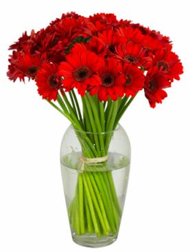Bouquet de gerbera rouges