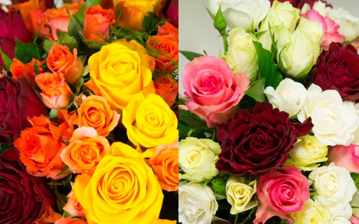 Sens des roses et des différentes couleurs dans le langage floral