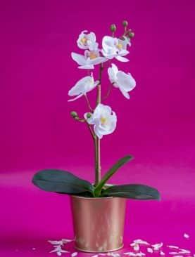 orchidée artificielle avec pot doré